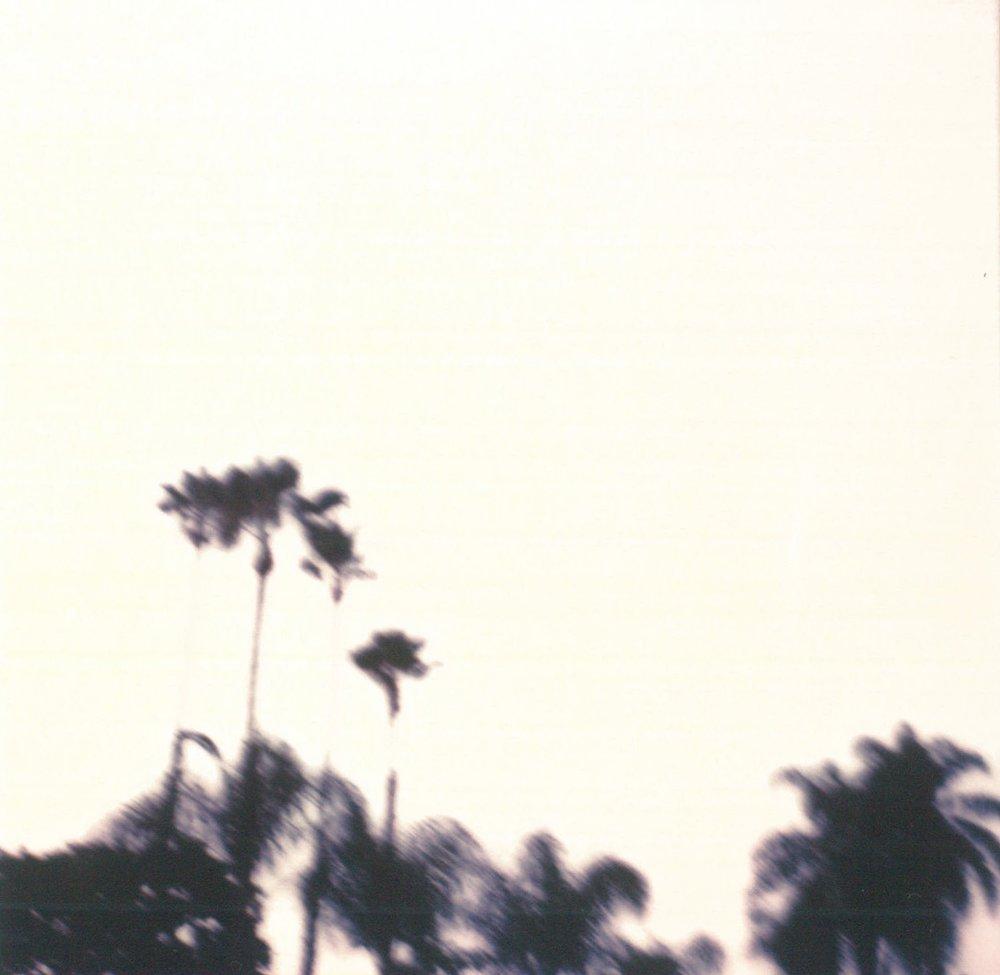palmtreesx70.jpg