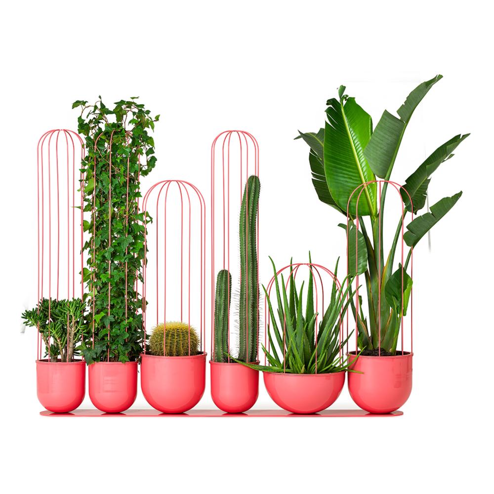Cactus Planter   Nola