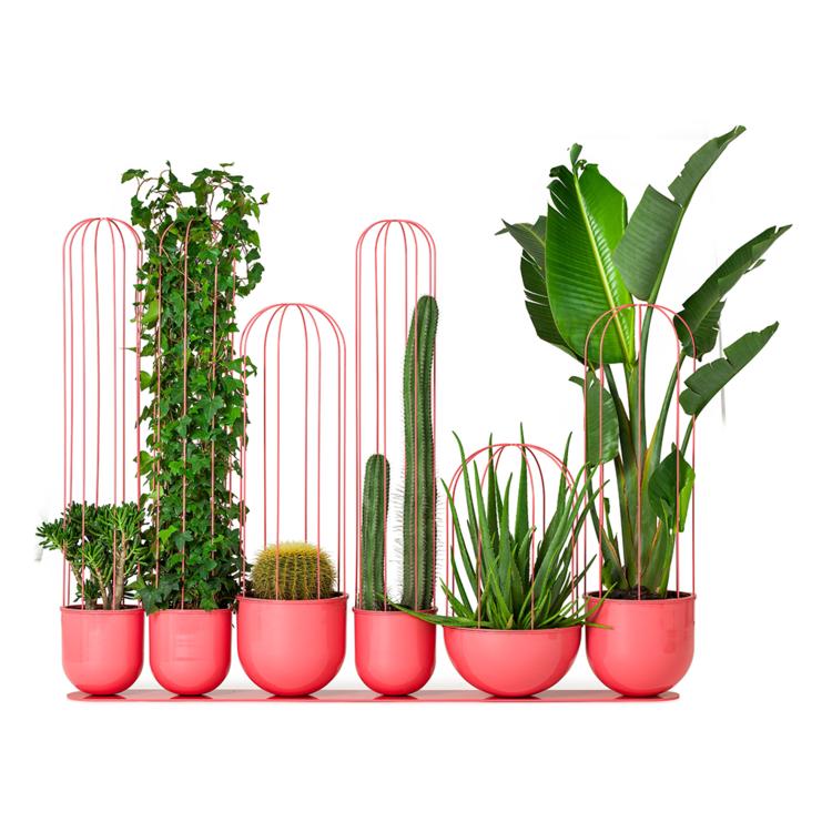 Cacti Planter   Nola