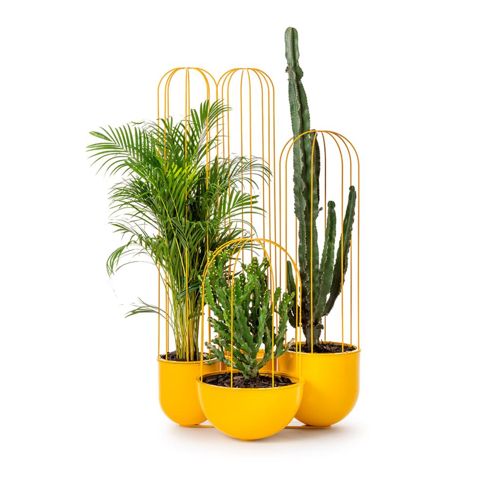 Cacti Planter   Nola / Anki Gneib