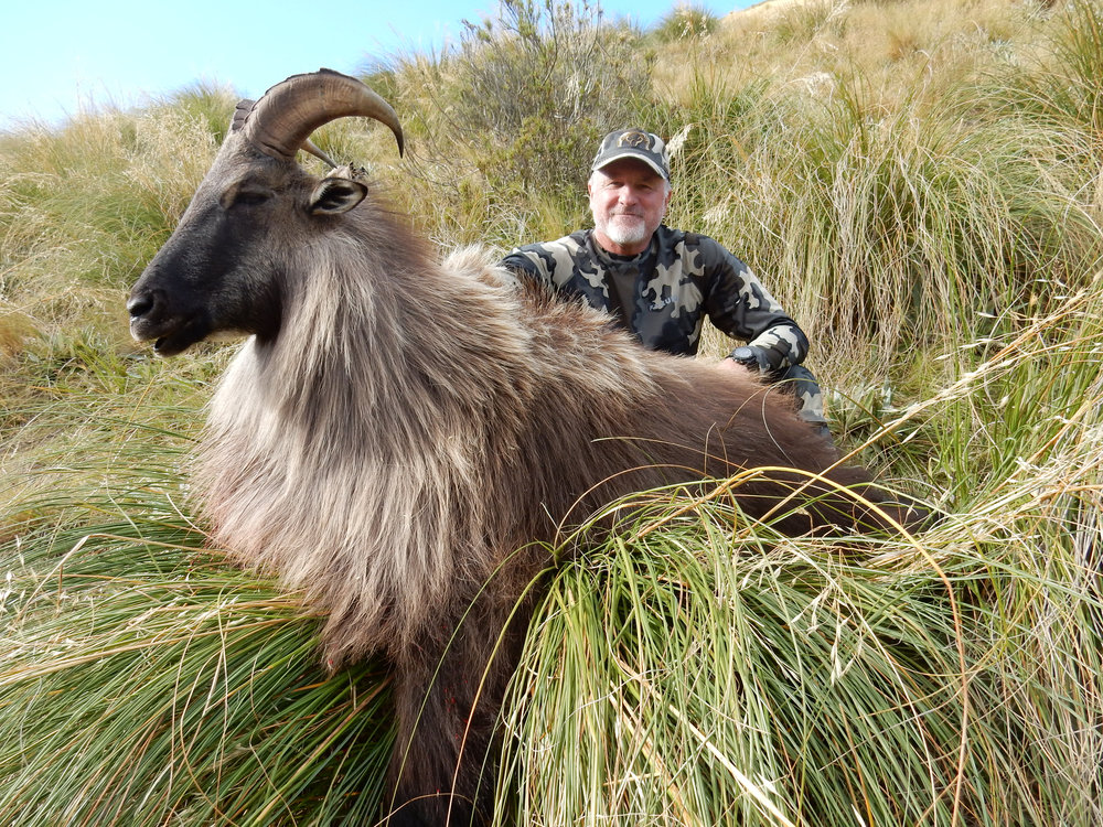 Tahr foot hunts