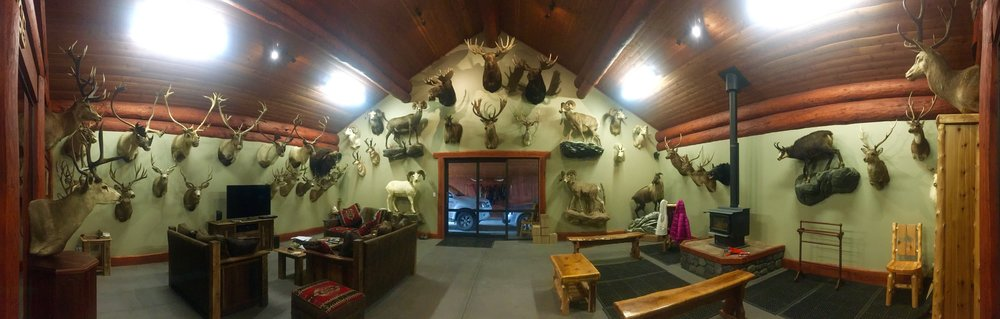Woodbury Safari Lodge Trophy Room displaying over 50 South Pacific & North American species including two Sheep Grand Slams.