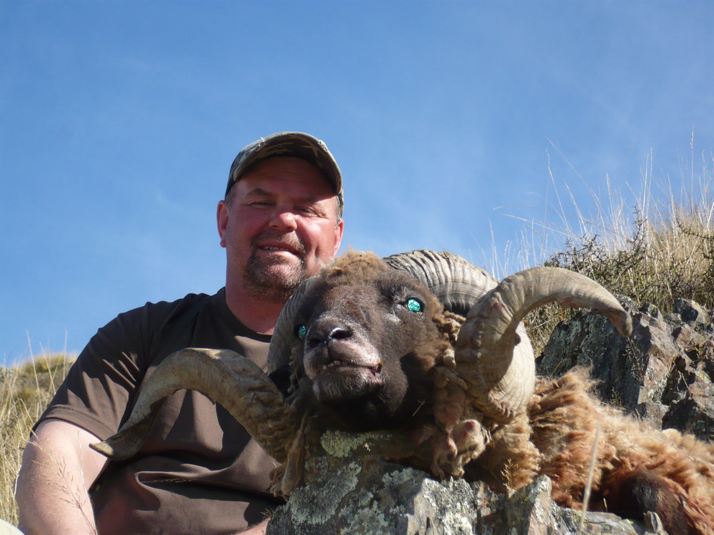 New Zealand Arapawa Ram trophy