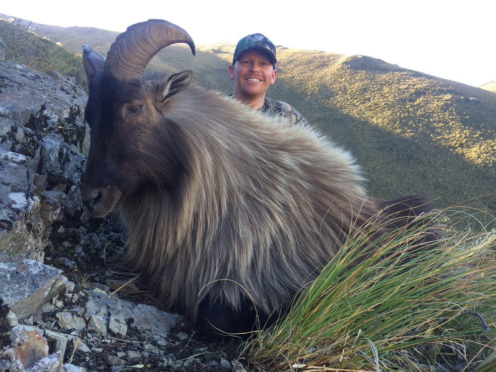 Very old bull Tahr - harvested 2016 season by Chris Uboldi of USA