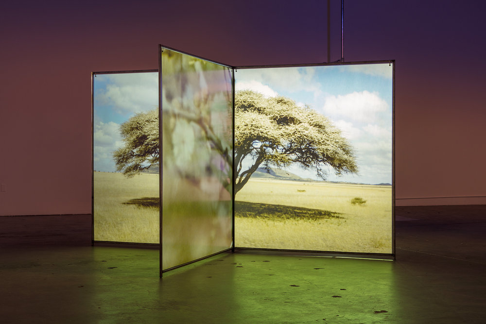 Diana Thater, A Runaway World, 2016-2017. Video installation Dimensions variable. Installation view, The Mistake Room, Los Angeles. Photo Credit: Fredrik Nilsen © Diana Thater and The Mistake Room Inc.