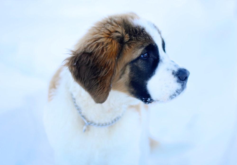 puppyfuzz.jpg