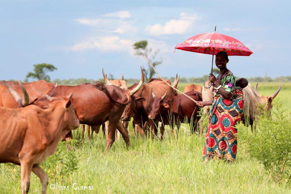 7-Woman heading Cow.jpg