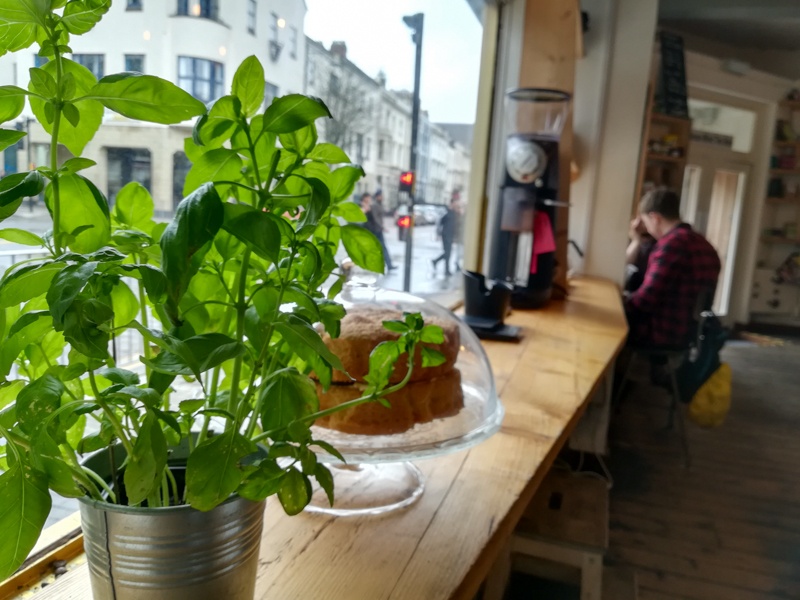 Window seat with plant in Little Man Coffee, Cardiff