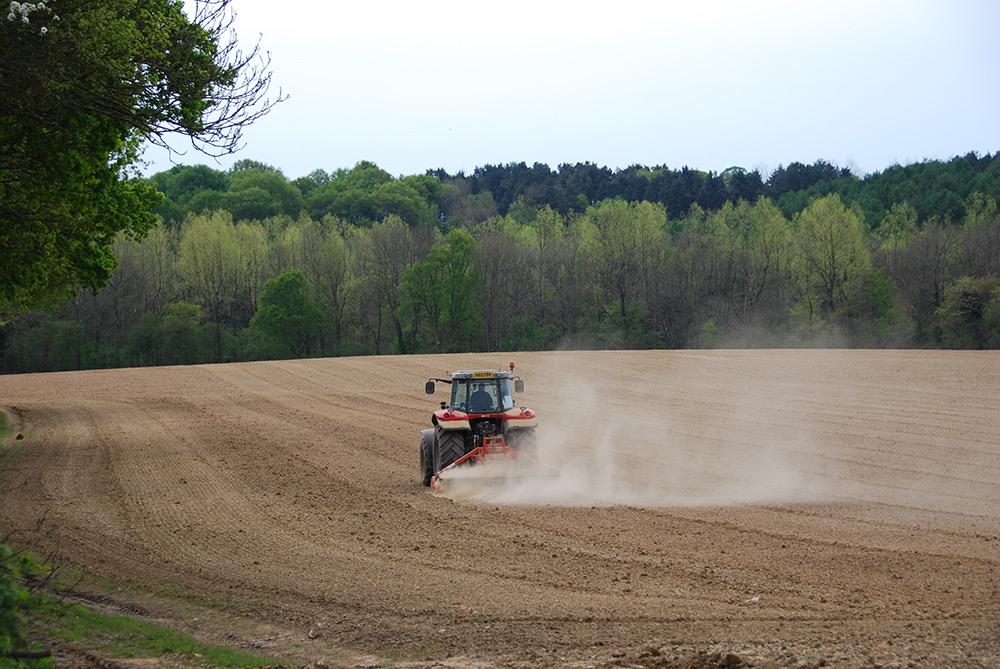 Final harrowing in April before planting