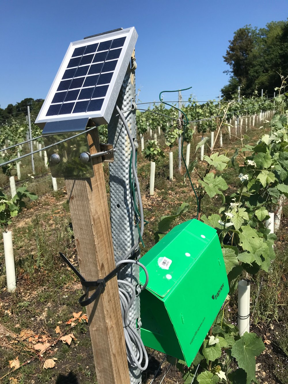 Our weather stations help us to keep track of trends and plan our spraying programme, while our traps allow us to keep an eye out for any potential pests such as Light Brown Apple Moth.