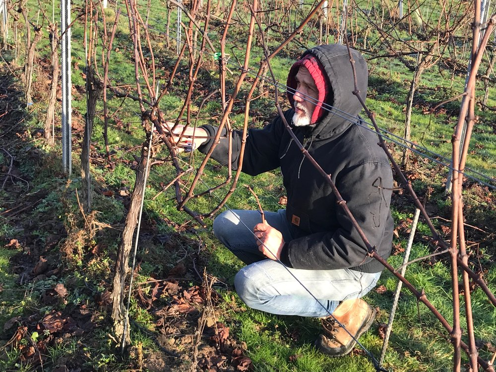 We were v impressed with Simonit & Sirch - Italian rock stars of pruning - masterclass at Plumpton