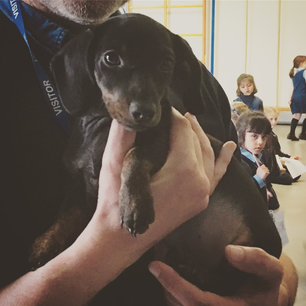Nottingham Girls' school sausage dog. Her name is Delilah!