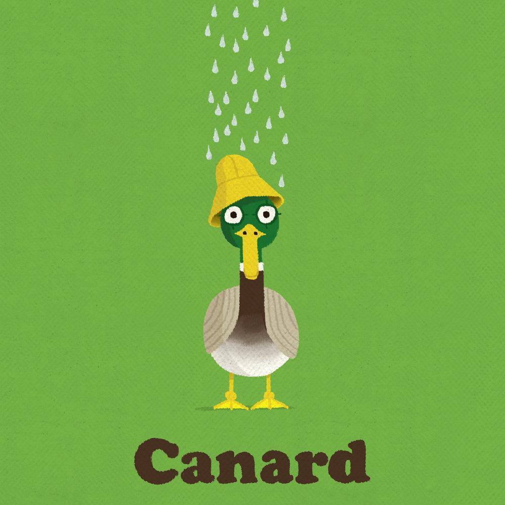 1 duck.jpg