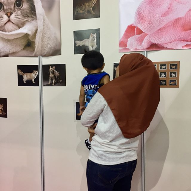 THE 6th EDITION of HALFEST ASEAN. Do visit our booth (Majestic Grooming)  No 544 at Mines Exhibition Centre, Seri Kembangan, Selangor, Malaysia. We will be here from 23rd August until 27th August 2017. Dont forget to come and join us!!! 🐈🐈🐈#catagram #cat #kucing #halalcatshampoo #halal #lovehalal #petgrooming #meow #cats #catsofinstagram