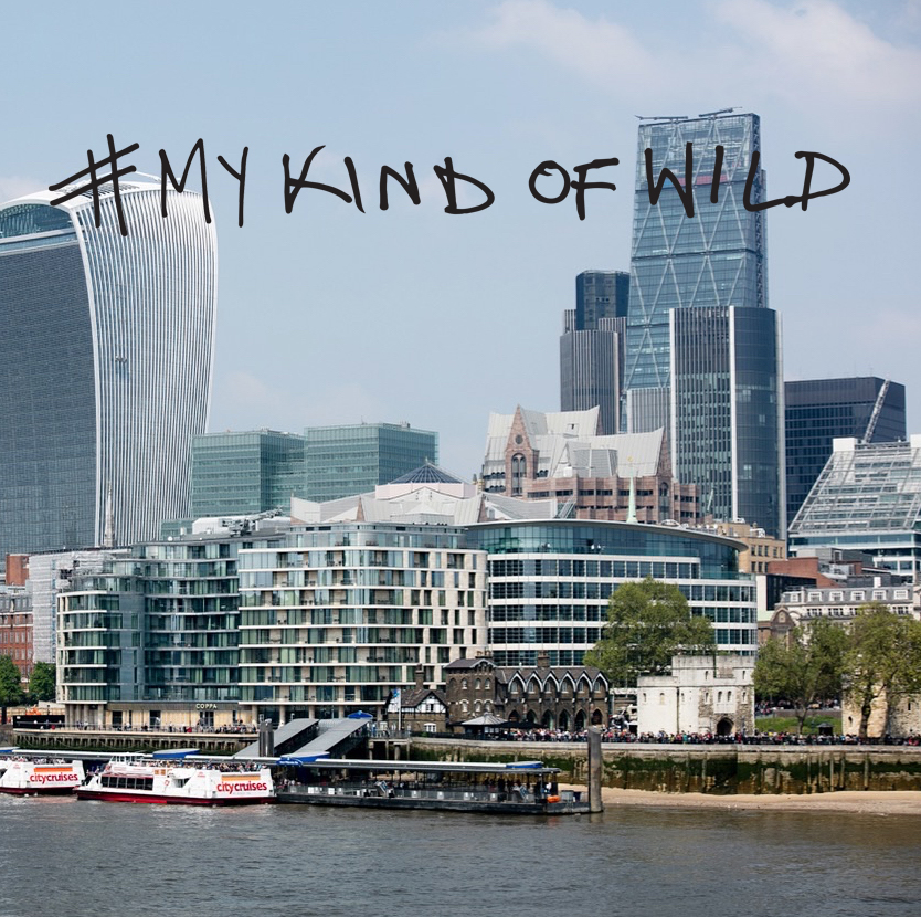 mykindofwild1.jpg