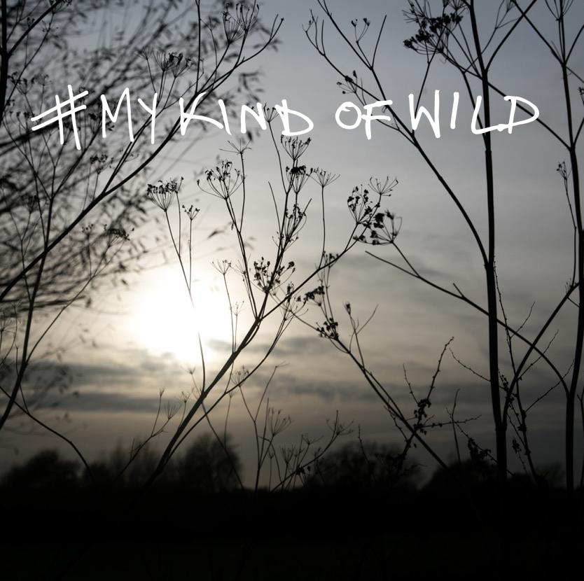 mykindofwild9.jpg