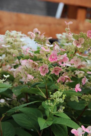 Flowers03.jpeg