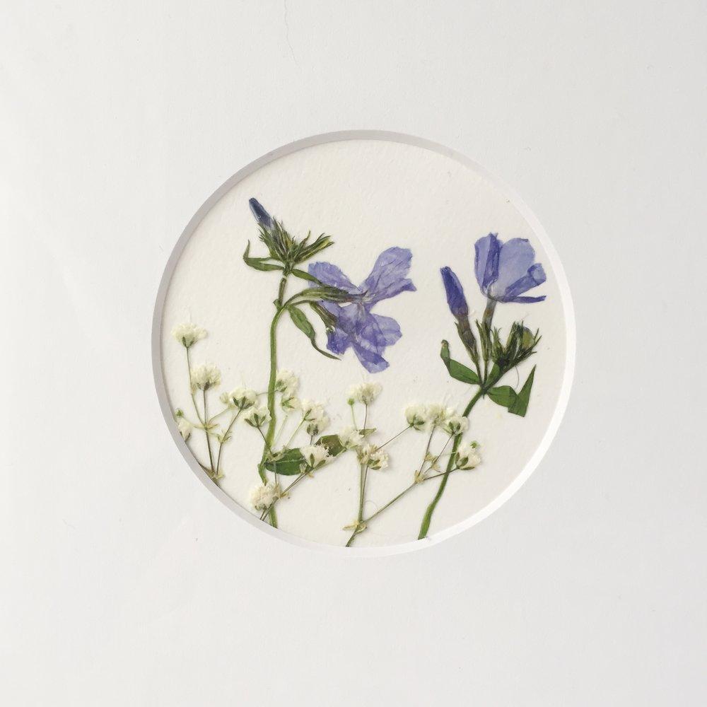 Herbariums -