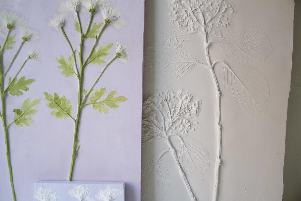 Hydrangea macrophylla - Garden Hydrangea 01-02 -