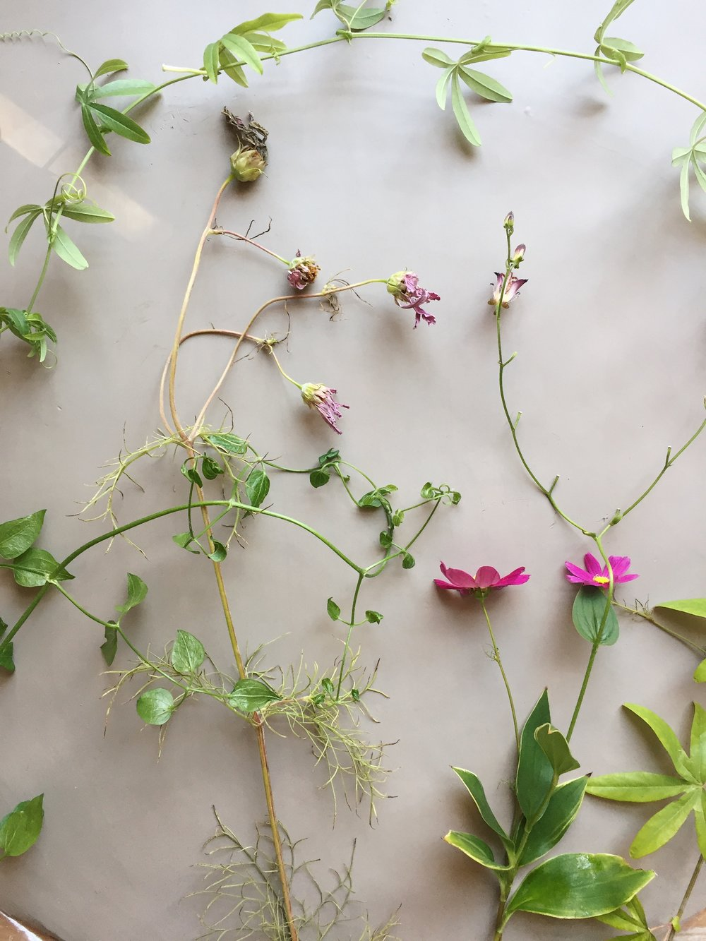 - the Dorene collection consist of the following flowers:passion flower, digitalis, comfrey, anemone,  callicarpa, clematis, rue, scabiosa,lisianthis, marigold, evergreen candy tuft, hellebores, and queen anne lace