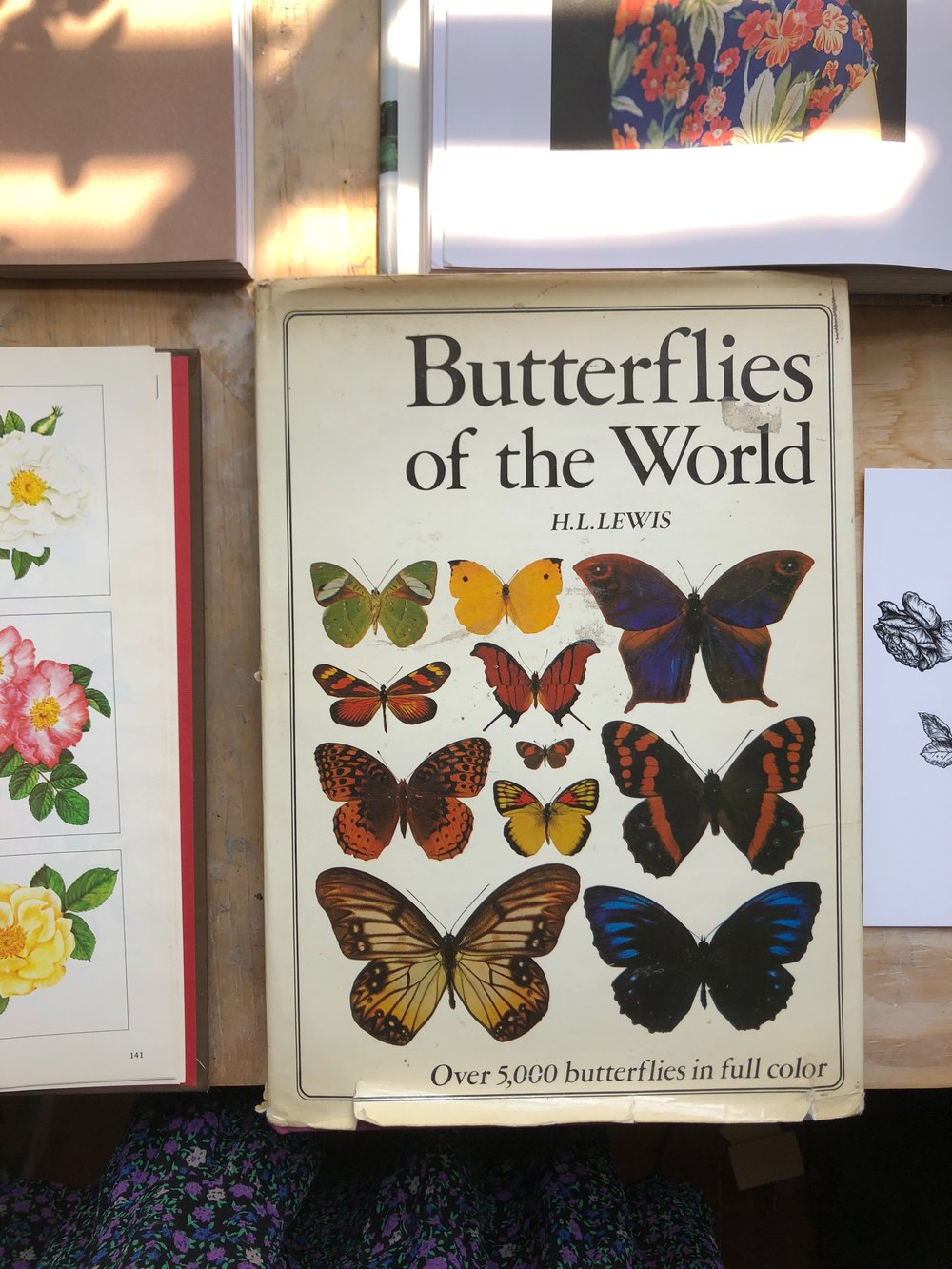 Butterflies, Dragonflies, spiders, ants   - I used the Butterfly Company because all of their specimens for sale are farm raised butterflies from around the world that died from natural causes.