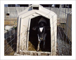 Careful of wet bedding in hutches when the weather is near freezing and ground is wet and cold