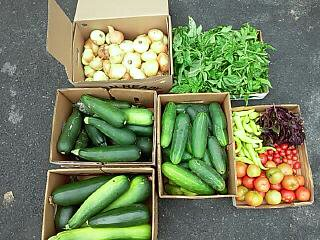 Vegetables boxed.jpg
