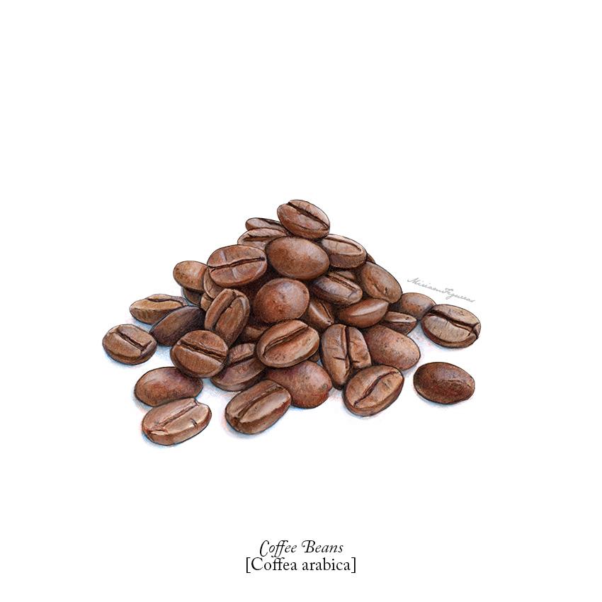 00_AllTogetherNuts_CoffeeBeans.jpg