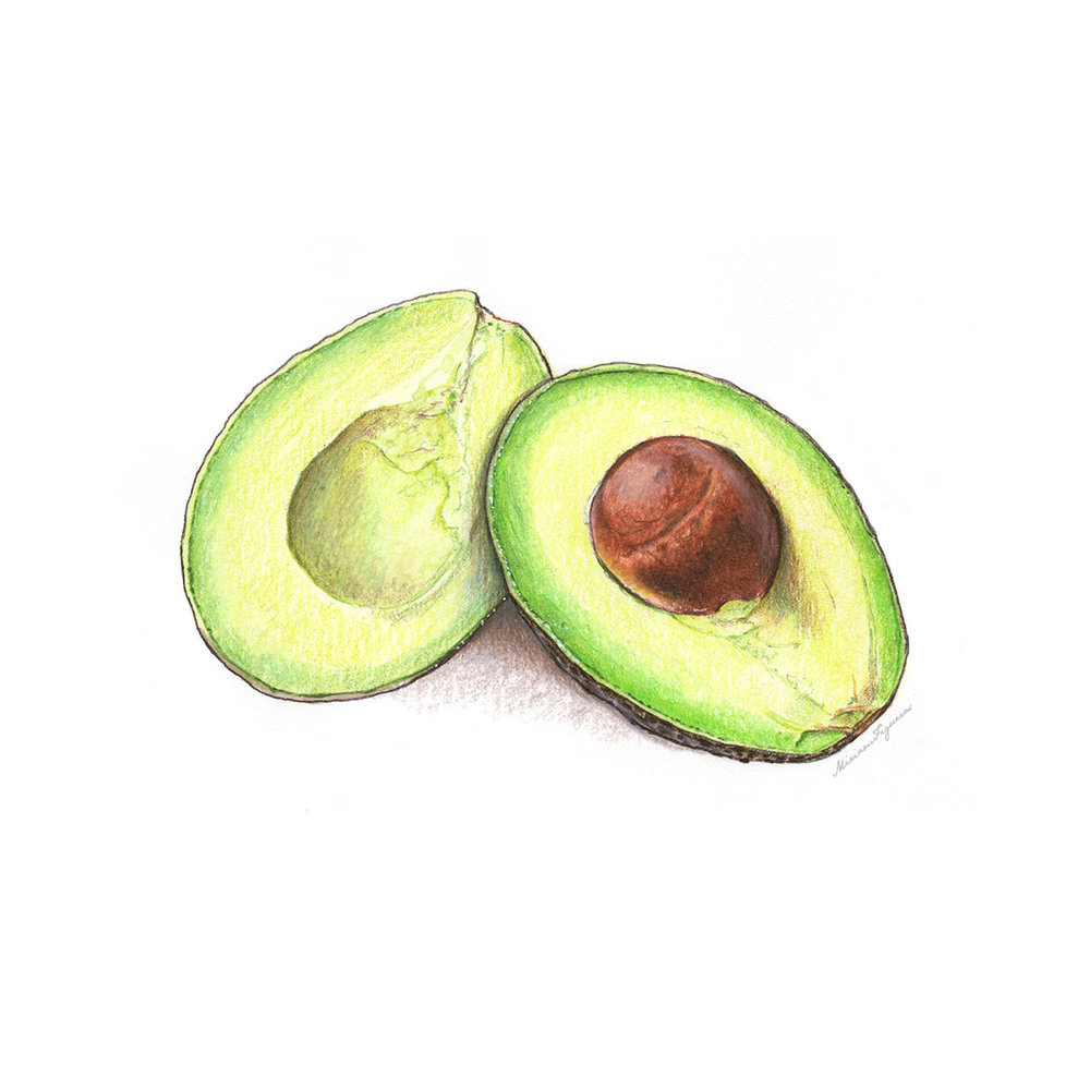 Avocados Illustration