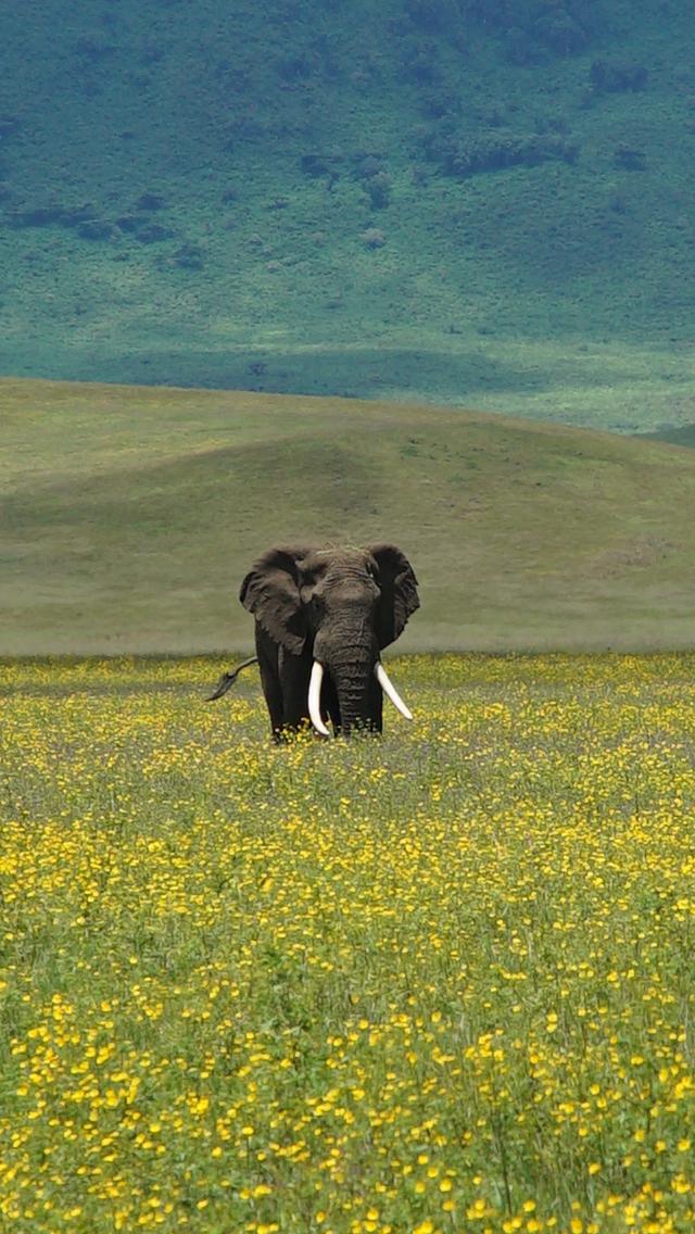 Ngorongoro elephant.jpg