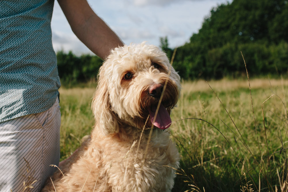 family and dog portrait photographer, horsham, crawley