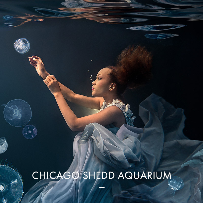 Shedd Aquarium Underwater Beauty