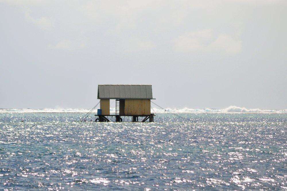 Leeward Islands 076.JPG