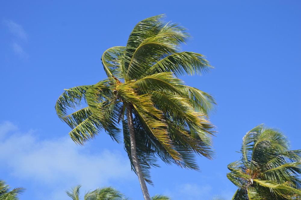 Leeward Islands 098.JPG