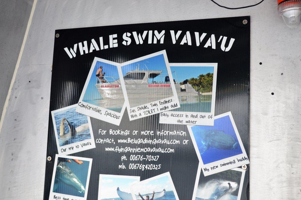 Whale Swim 018.JPG