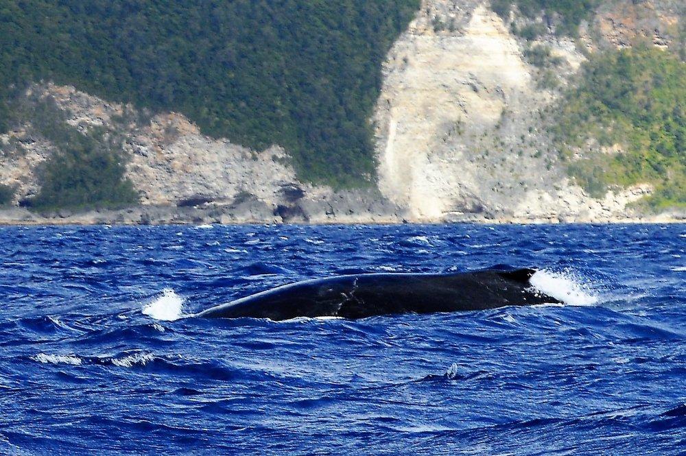 Whale Swim 070.JPG