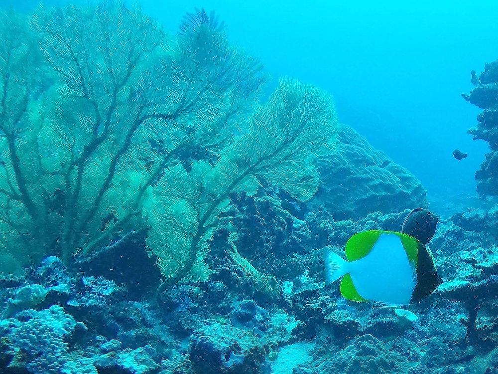 Tonga dive 1 038.JPG