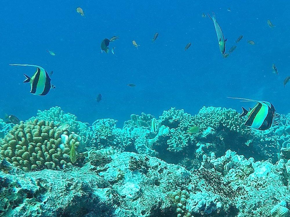 Tonga dive 1 105.JPG