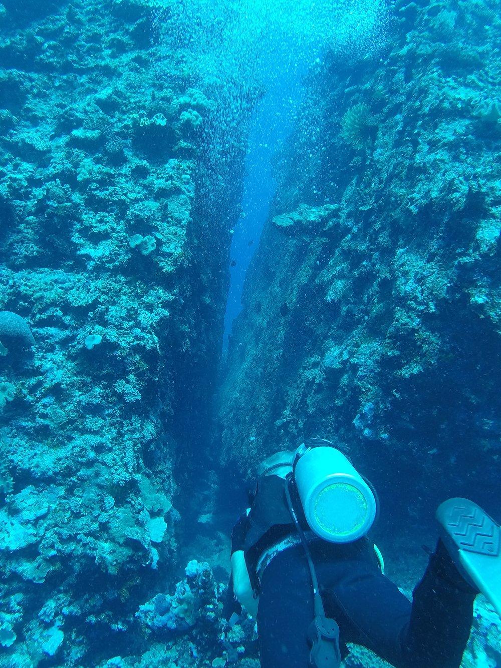 Tonga dive 1 100.JPG