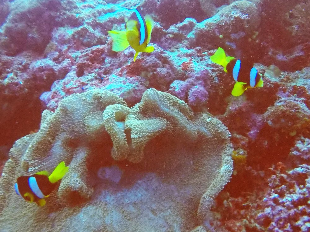 Vanuatu Dive 115.JPG