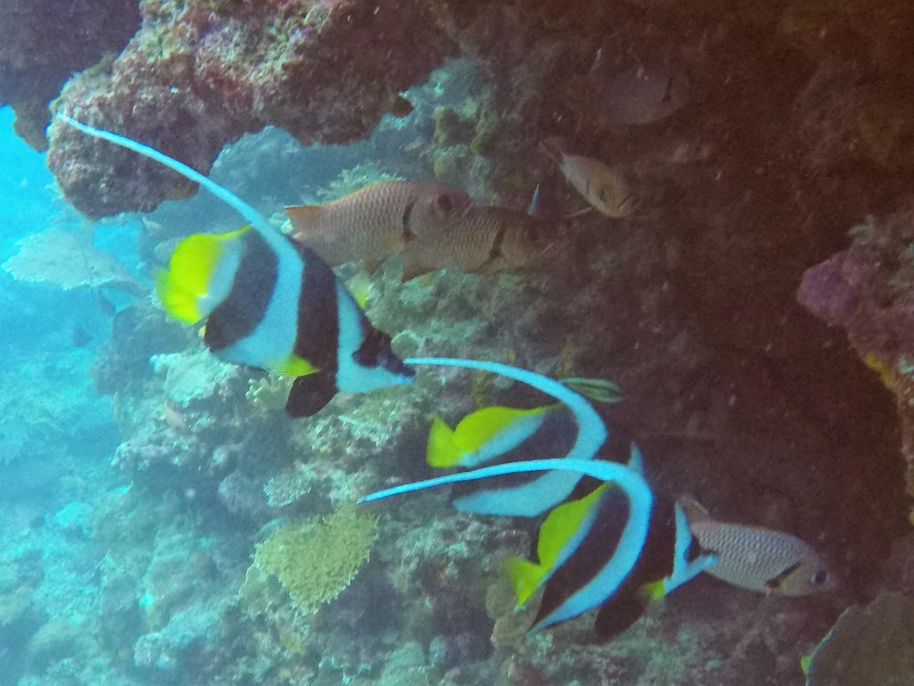 Vanuatu Dive 152.JPG