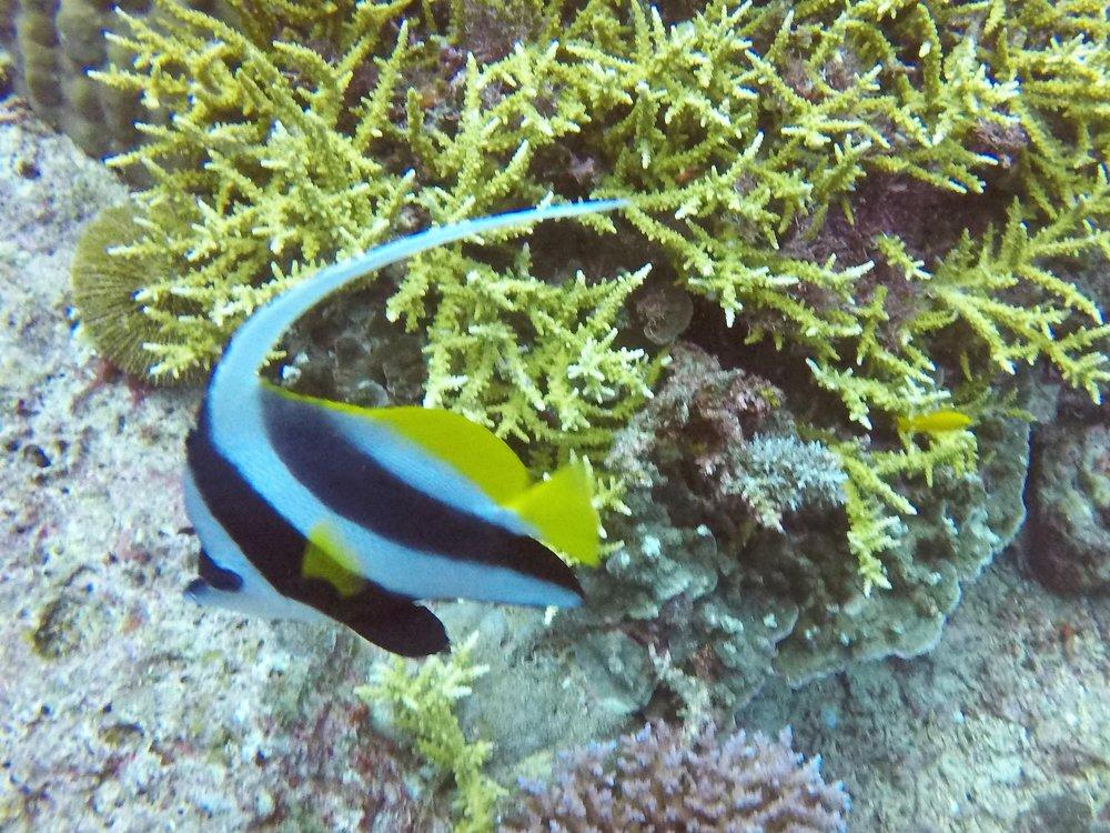 Vanuatu Dive 136.JPG