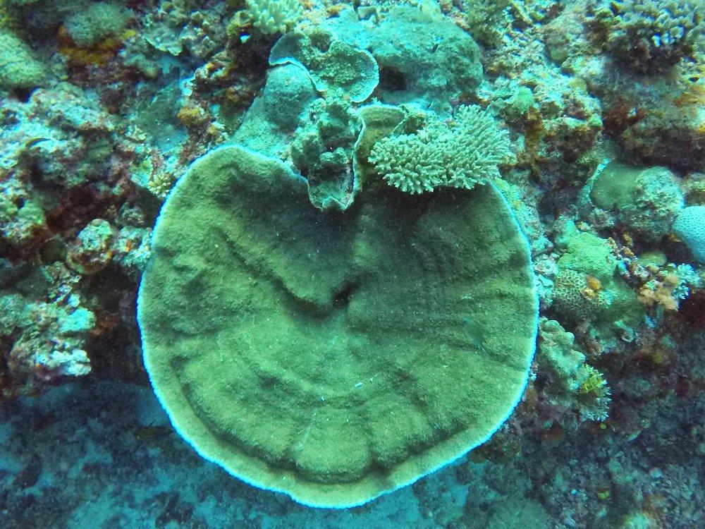 Vanuatu Dive 188.JPG