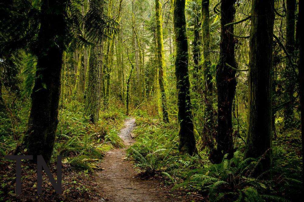 2011 0094 - TN Photography - Landscape - Portland - Audubon Society - Forest Park - 3-16-2011 - 0046.jpg