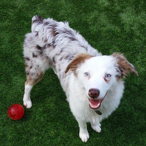 Good Dog! Beginner   SIX WEEK COURSE   $80