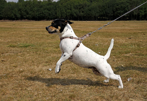 Leisurely Leash   THREE WEEK COURSE   $50