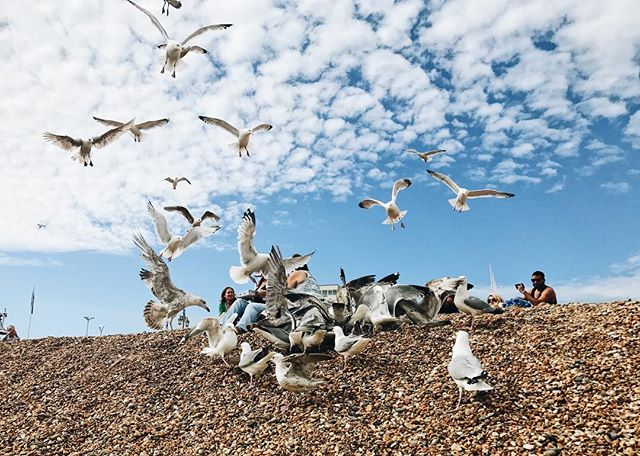 Great day in Brighton! Was very close to being attacked by seagulls whilst taking this picture... 😅 #Brighton #beach