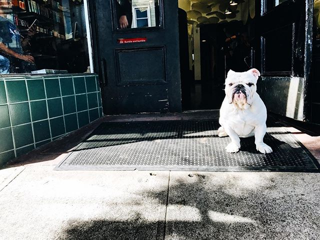 A mean looking pup on the streets of San Francisco 🐶 #sanfrancisco #california