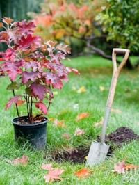 plant in fall.jpg