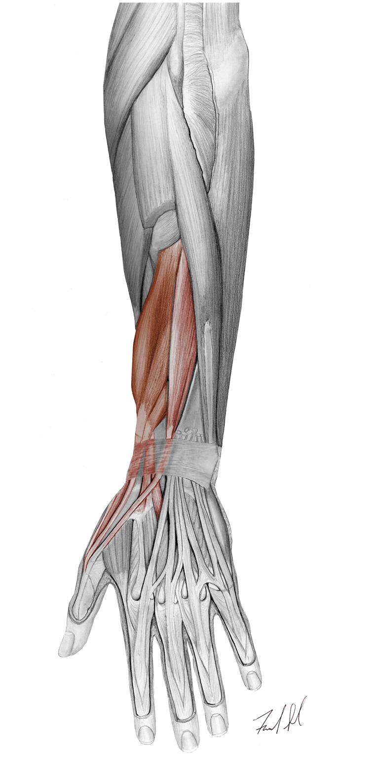Wrist & Hand Pathologies